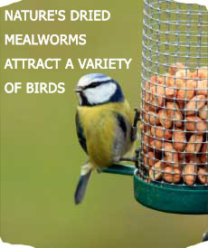 NATURE'S DRIED MEALWORMS ATTRACT A VARIETY OF BIRDS