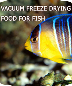VACUUM FREEZE DRYING FOOD FOR FISH